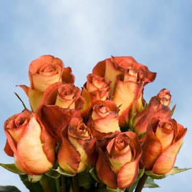 Cut Orange-Red Bicolor Roses - Leonidas Roses - Fresh Flowers Wholesale Express Delivery (200 Red Roses)