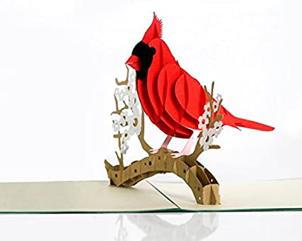 Amazon 3d popup card of cardinal bird paper art handicrafts 3d popup card of cardinal bird paper art handicrafts greeting cards handmade m4hsunfo