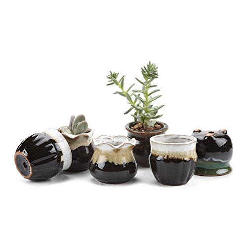 T4U 2.5 Inch Ceramic Flowing glaze Black Base Serial(3 Shape) Set succulent Plant Pot/Cactus Plant Pot Flower Pot/Container/Planter Package 1 Pack of 6