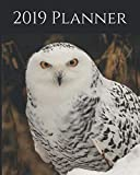 "2019 Planner: Weekly Planner & Monthly Calendar - Desk Diary, Journal, Snowy Owl, Alaskan Owls, Alaska, North American Wildlife, Raw Nature, Owls, Birds - 8x10"" (Creative Fusion Planners)"