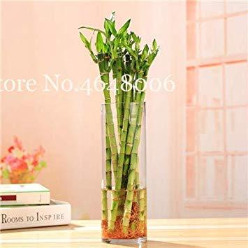 Nuevo Colorido 20 De Las Pc De Bambú Bonsai Planta Del