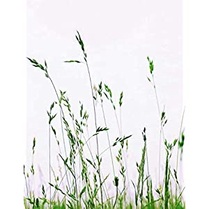"Notebook: Meadow Grass Nature Green Summer Blades of Grass 8.5"" x 11"" 150 Ruled Pages"