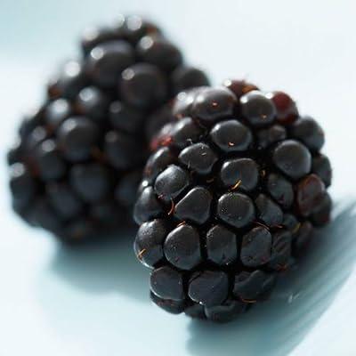 Organic Heirloom 50 Blackberry Seeds Sweet Black Berry Giant Blackberries Triple Crown Blackberry Black Mulberry Seeds Fruit Seeds F81