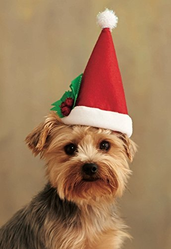Vb Costume - Pet Santa Hat Christmas Costume