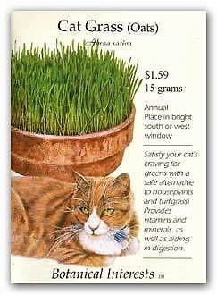 Cat Grass (Oats) Seeds - 15 grams - Botanical Interests