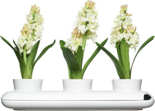 Sagaform 5015274 Stoneware Herb Pot Trio, White