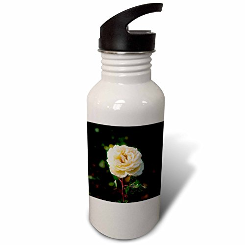 3dRose Alexis Photography - Flowers Rose - Beige rose flower, dark green background - Flip Straw 21oz Water Bottle (wb_270256_2)