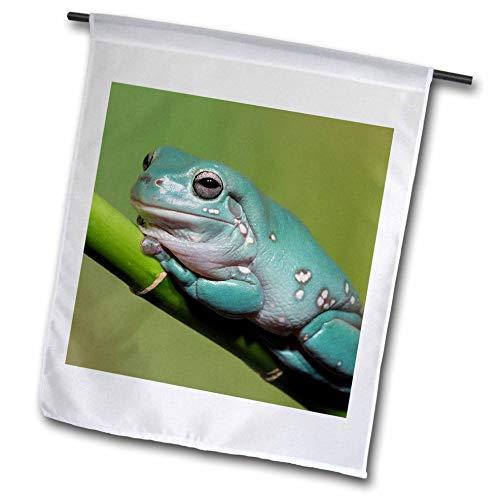 3dRose Danita Delimont - Frogs - Dumpy Tree Frog, Australian Green Tree Frog, Litoria caerulea. - 18 x 27 inch Garden Flag (fl_312941_2) ()