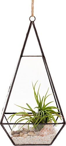 Mindful Design Glass Terrarium - Geometric Large Diamond Desktop Garden Planter (Black)
