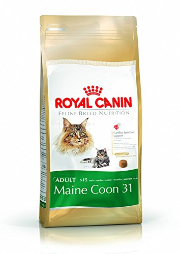 Royal Canin Feline Cat Maine Coon 31 4Kg Dry by Royal - Shopping Maine