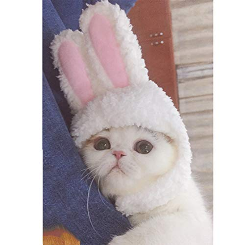 Cuteboom Cat Rabbit Hat Kitty Bunny Costume Small Cat Easter Costume Small Pet Halloween Birthday Cap (One Size) ()