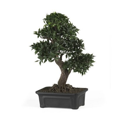 Nearly Natural Japanese Ficus Bonsai 24 inch Silk Plant