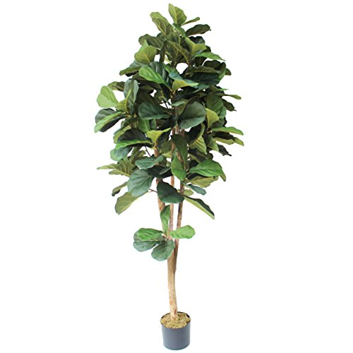 6' Fiddle Leaf Fig Silk Tree w/Pot - Fig Trees Silk
