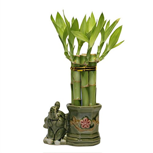 Small Lucky Bamboo Arrangement Happy Elephant Favor unique from jmbamboo by JM BAMBOO