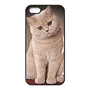 AKERCY British Shorthair Cat Phone Case For iPhone 5,5S [Pattern-1]