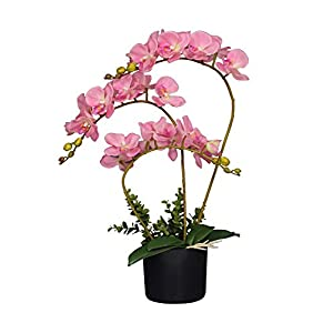 AMERIQUE Gorgeous and Unique 2' Artificial Silk Flower Plant, with Nursery Plastic Pot, Feel Real Technology, Super Quality, White Orchid 16