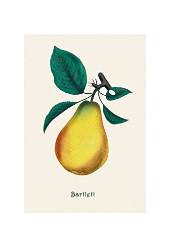 Buyenlarge Bartlett Pear Print (Canvas Giclee 12x18)