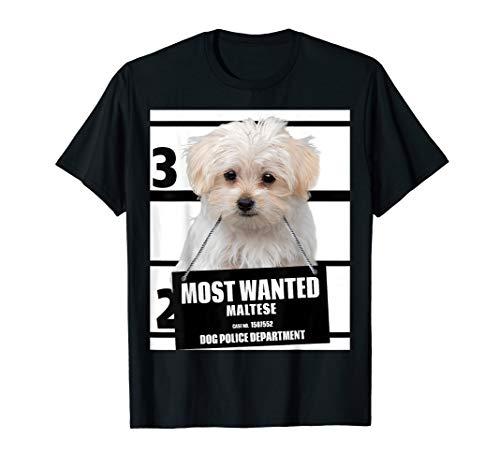 - Most Wanted Maltese T-shirt - Dog Tee Shirts - 13