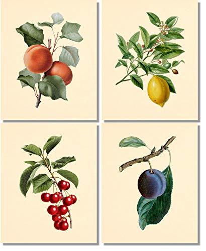 (Fruit Wall Art- Vintage Botanical Prints (Set of 4) - 8x10 - Unframed - Plum Peach Cherry Lemon)