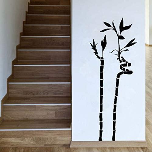 Tianpengyuanshuai Planta Ornamental Espiral Planta de bambú ...