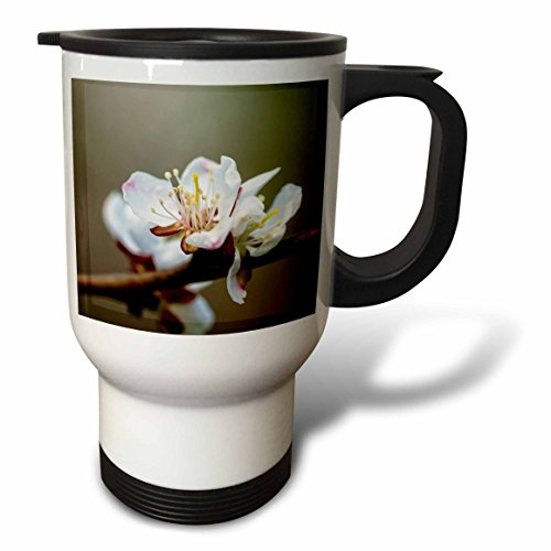 3dRose Alexis Photography - Flowers Sakura Beautiful - Closeup view of a tender Japanese apricot flower, smooth background - 14oz Stainless Steel Travel Mug (tm_286522_1) by 3dRose