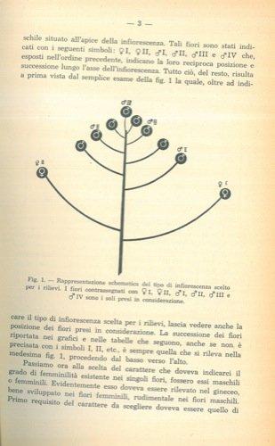 il-gradiente-femminile-nelle-infiorescenze-di-akebia-quinata-decne-lardizabalaceae
