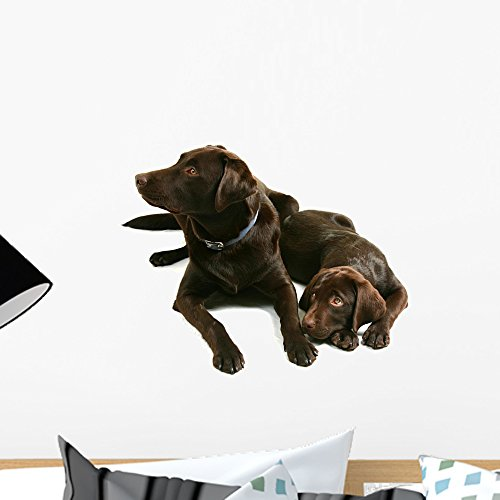 - Wallmonkeys Two Chocolate Labrador Retriever Brothers Wall Decal Peel and Stick Graphic WM352541 (18 in W x 13 in H)