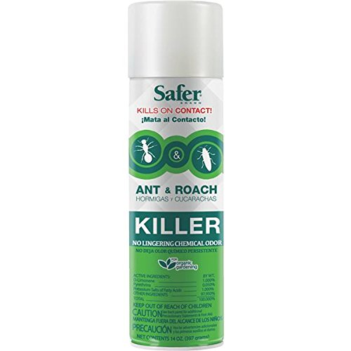 safer-brand-14-ounce-aerosol-ant-and-roach-killer-5720
