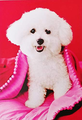Bichon Frise Greeting Card - As Far As Friends Go - You're The Best of The Breed! Happy Birthday Greeting Card with Bichon Frise Dog (Friendship)