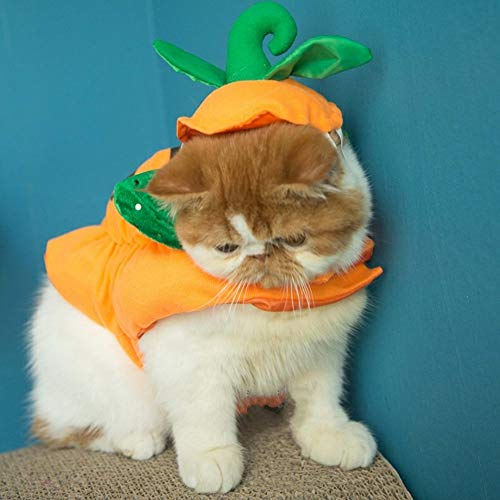 Stock Show Cat Halloween Costume Suits Clothes Pet Pumpkin Hats Headbands Festival Pumpkin Costumes Accessory for Dogs Cats -