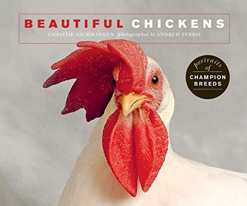 Beautiful Chickens:Portraits of champion breeds (Beautiful Animals) (Parmesan Chick)