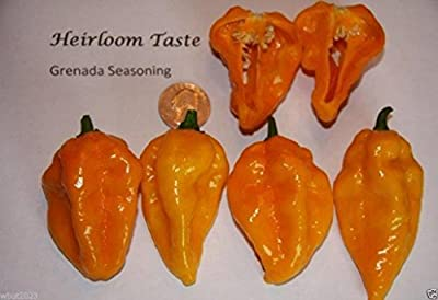 Grenada Seasoning Pepper,(30 Seeds) Sweet, Intensely Aromatic, Very Little Heat.