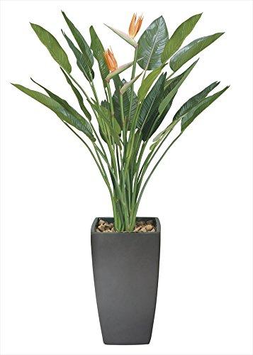光触媒 光の楽園 アートストレチア花付1.8m 玄関やリビングの華やかなアクセント B07BC7XNMC