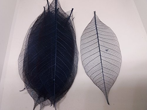 100x blue Natural Skeleton Leaves Rubber Tree Scrapbook Craft Wedding Decor (Christmas Hobbycraft Decorations Tree)