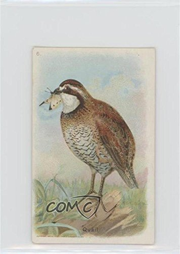 Quail (Trading Card) 1933 Arm & Hammer Useful Birds of America Series 6 - [Base] #6