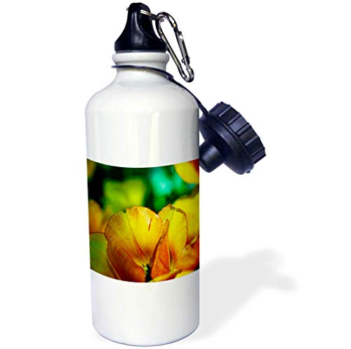 3dRose Alexis Photography - Flowers Tulips - Sunlit Colorful Yellow, Orange Tulip. Spring is in The Garden - 21 oz Sports Water Bottle (wb_294562_1) by 3dRose