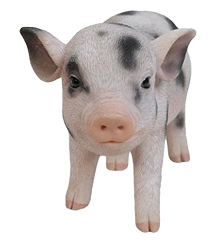 nding Baby Pig with black Spots ()