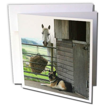 3dRose TDSwhite - Horse Equine Photos - Horse Dog Barnyard Scene - 6 Greeting Cards with Envelopes (gc_285499_1)