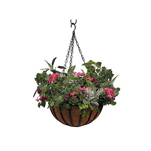 - Border Concepts 72260 Wrought Iron Traditional Hanging Basket, 12-Inch, Black