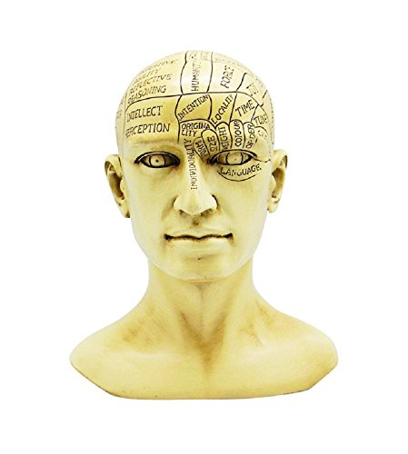 logy Human Head Skull Bust Figurine Sculpture Psychology Science Décor New ()