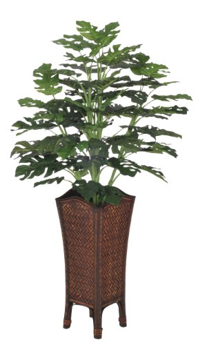 House of Silk Flowers Artificial Split Philo in Rattan Planter by House of Silk Flowers