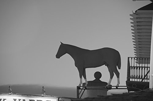 24 x 36 B&W Giclee Print of Horse figure, a longtime signature of Fincher's White Front Western Store on Exchange Avenue in the Stockyards District of Fort Worth, Texas 2014 - On Stores Worth Avenue