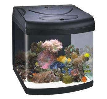 Buy Boyu By 308 Aquarium Fish Tank Online At Low Prices In India