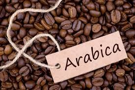 Image result for Arabica Beans