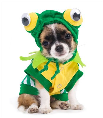 "Puppe Love Frog Costume for Dogs - Size 6 (16"" l x 20.5"" ..."