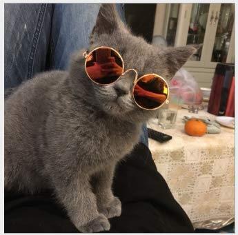 Werse Gafas De Sol Gato Gafas De Sol De Perro - Amarillo ...