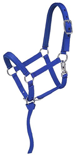 Tough 1 Nylon padded Miniature Halter, Blue/Royal, - Miniature 1 Tough