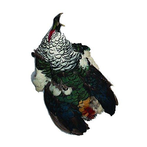 Zucker Feather (TM) - Lady Amherst Pheasant Pelt #1 - Natural-WC (Skin Pheasant)