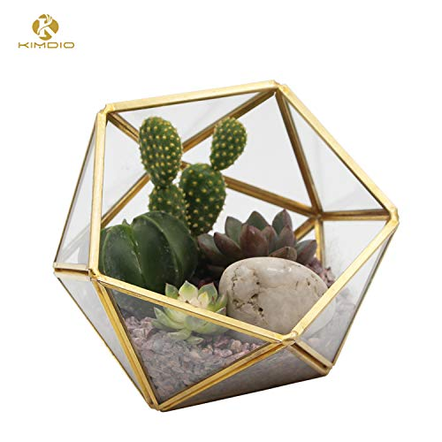 Kimdio Geometric Terrarium Clear Glass Tabletop Planter Air Plant Holder Display for Succulent Fern Moss Air Plants Holder Miniature Outdoor Fairy Garden DIY Gift (M-Gold)]()