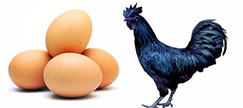 Fresh Egg Kadaknath Chicken Eggs - 6 Each: Amazon in: Grocery